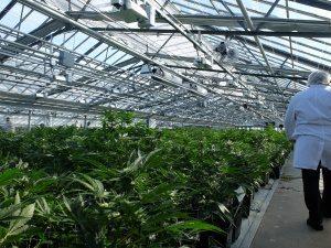 Converting Greenhouse